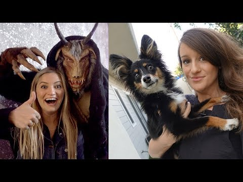 Download Youtube: Surprise Puppy Visit, Star Wars Gallery and Scary Christmas!