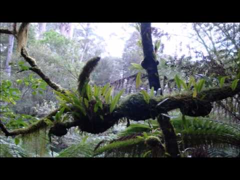 8 Hours Rainforest & Thunder Sounds