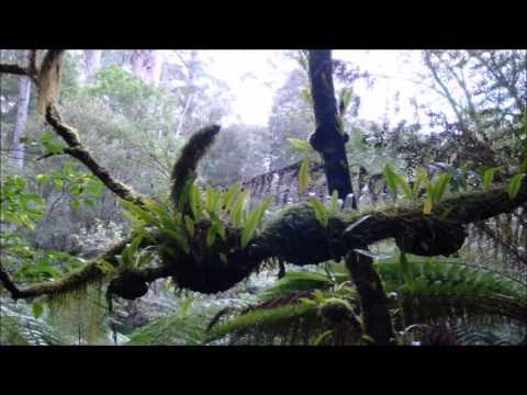 8 Hours Rainforest & Thunder Sounds