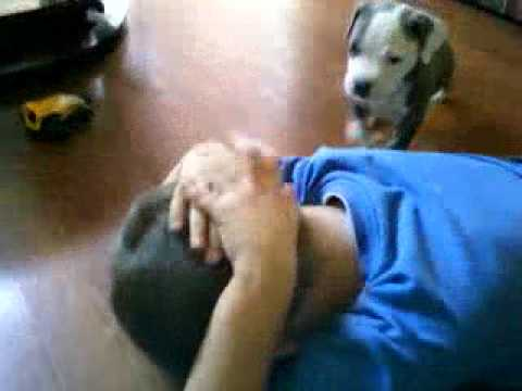 Crazy pitbull attack on 8 year old