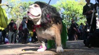 Halloween dog party: parata stregata per gli amici a 4 zampe
