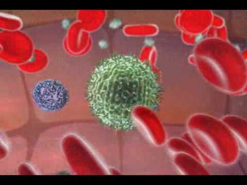 immune-system---natural-killer-cell