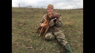 Охота на фазана, день первый.