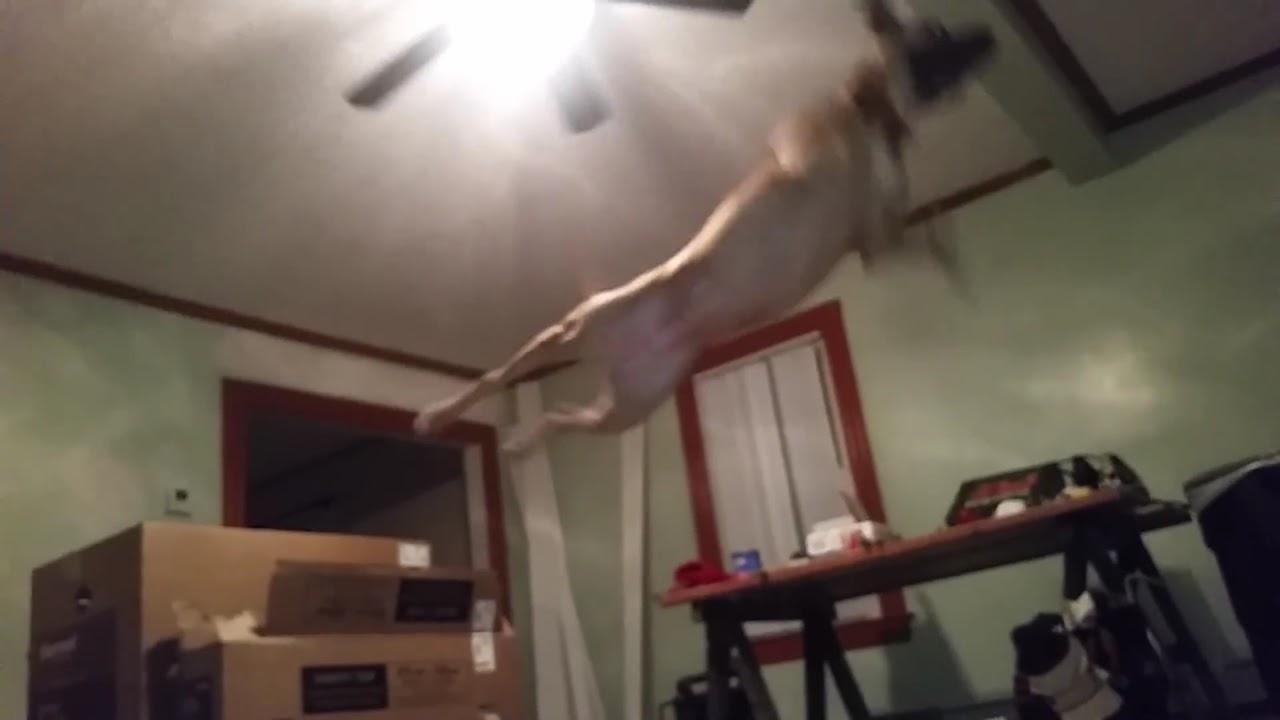 Dog With Fan : Dog vs ceiling fan youtube