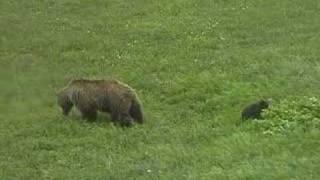 デナリ国立公園で見た熊の親子です http://www.amigoclub.jp/alaska/day...