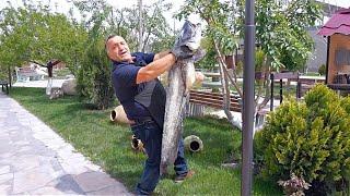 Огромная рыба Сом превращается в бомбический сочный шашлык Рецепт от Жоржа