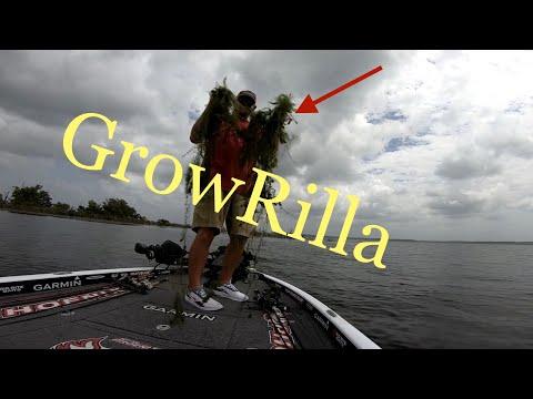 Sam Rayburn Aquatic Hydrilla Bass Fishing
