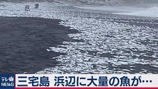 東京・三宅島の浜辺に大量の魚が…(2021年2月15日) - YouTube