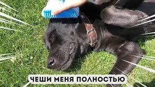 Угловая чесалка для кошек и собак / Расческа для животных / Чесалка для кошки / Коточесалка