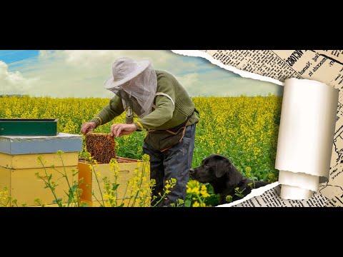 Как увеличить урожай меда. Посеять лучшие медоносы возле пасеки. Посевные медоносы.