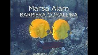 Marsa Alam - Barriera Corallina