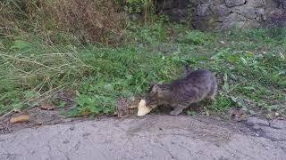Голодный хромой кот на Ангарском перевале