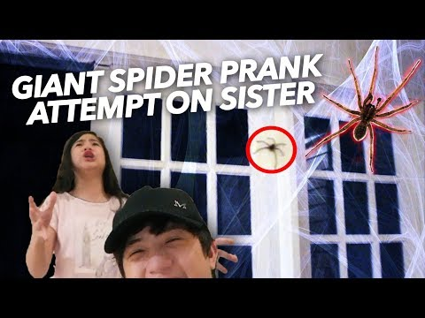Download Youtube: GIANT SPIDER PRANK ATTEMPT ON SISTER | Ranz and Niana