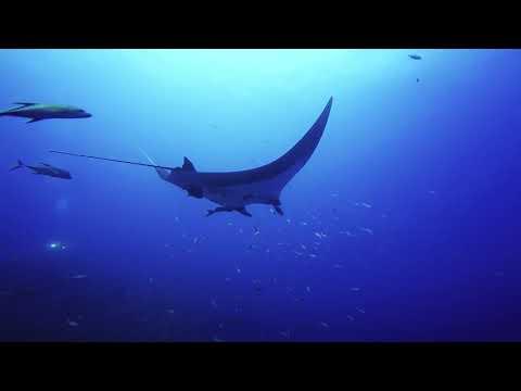 Y-kiki Trip Videos   Socorro trip 2020 w/ Y-kiki Divers
