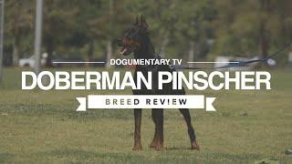 DOBERMAN PINSCHER BREED REVIEW