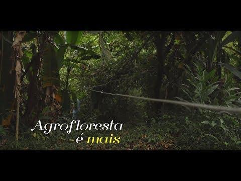 Fiocruz lança documentário 'Agrofloresta é mais'
