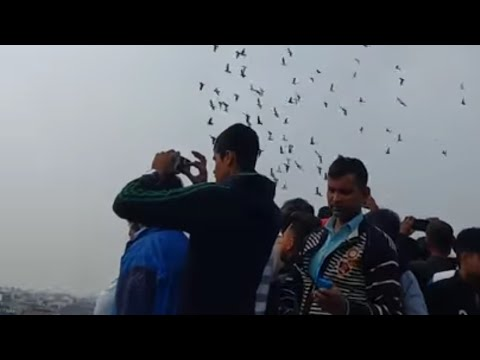 Karol Bagh ke kabooter race 8 January 2017 Delhi( INDIA) by- PUNJAB PIGEON CLUB (p.p.c.)