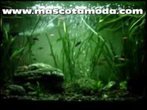 acuarios y peceras en quito ecuador youtube
