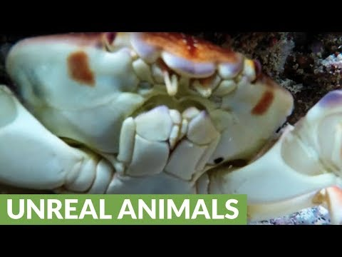 Crab steals GoPro and you won't believe the footage he creates