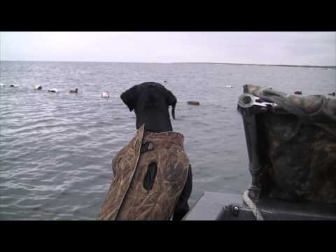 Best Sea Duck Hunting On The East Coast