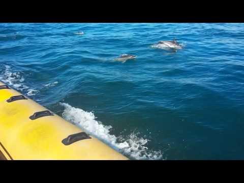 Dolphin Watching (Venture Jet, St Davids, Pembrokeshire, UK)