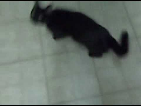 Betty Paige – My Cat – Not doing her Trick