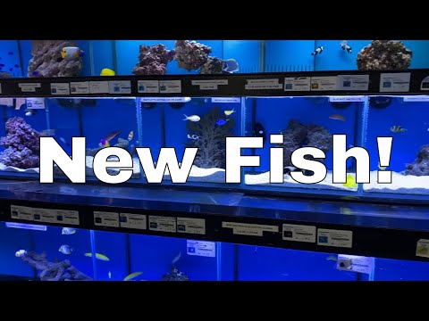 How To Cycle A Saltwater Tank / Marine Aquarium: Part 2 | Red Sea Reefer XL 425 Build
