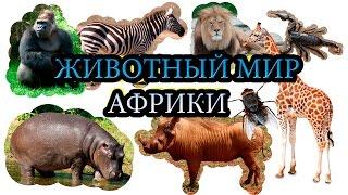 Животный мир Африки. Как говорят животные? Слушаем звуки. Развивающие мультики.