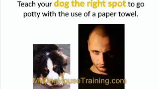Dog House Training - How To House Train An Older Dog