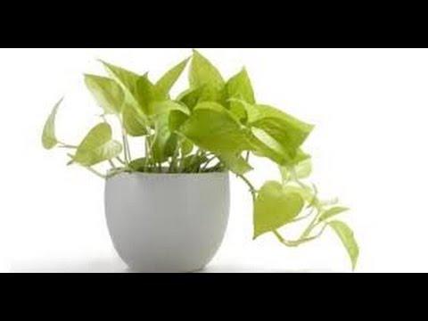 Vastu Plants Garden And Tree As Per Vastu Shastra Youtube