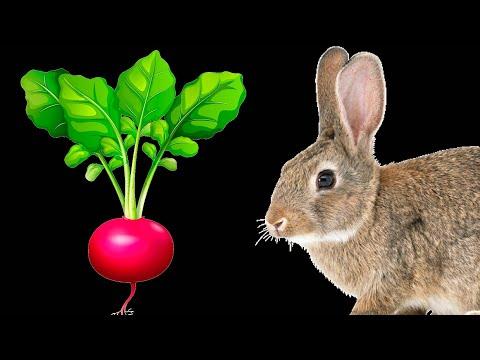 Можно ли кроликам ботву от редиски