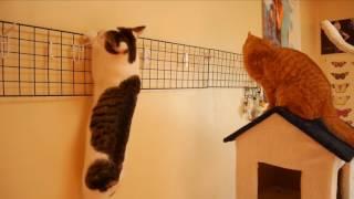 【なにがあったの?】突然けんすいし出した猫