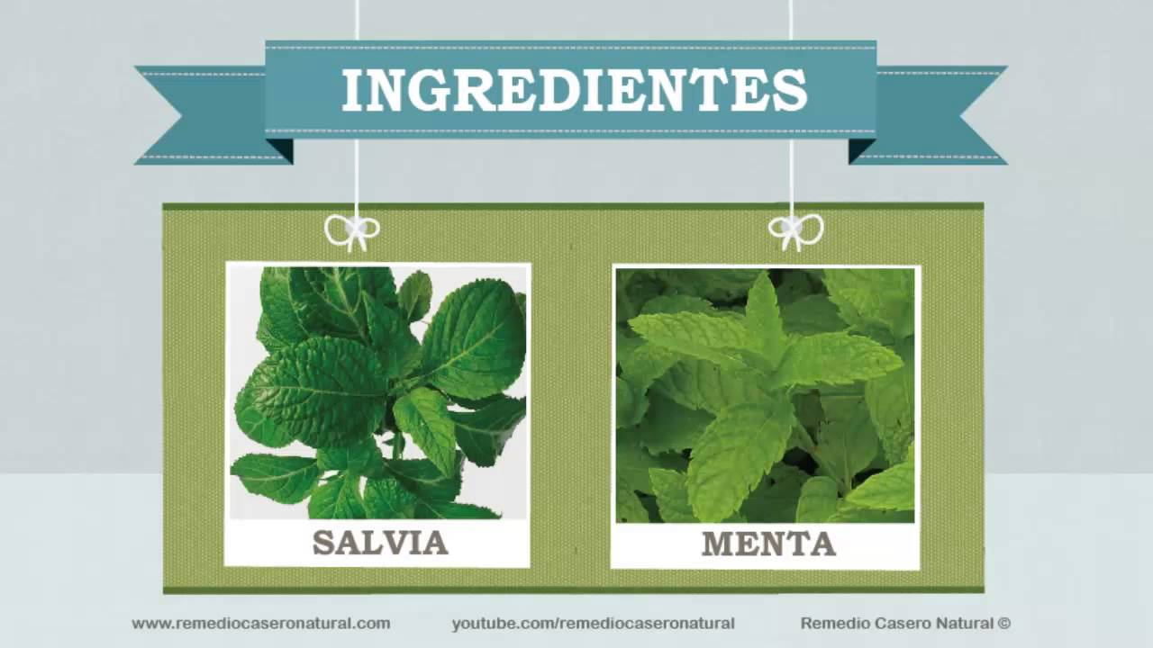 plantas repelentes de moscas youtube