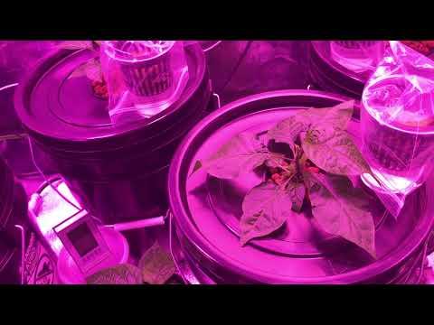 Automatic Refilling Kratky Grow Tent w/ Environmental Control