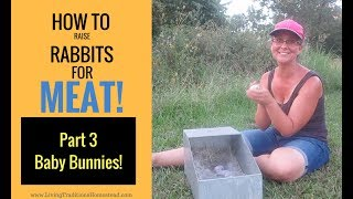 How To Raise Rabbits for Meat: Part 3 Caring for Baby Bunnies
