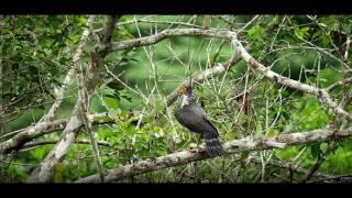 Rainforest Sounds: Yasuni Forest Concert