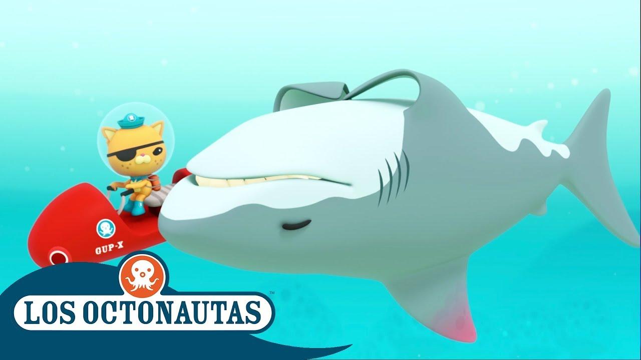 Los Octonautas Oficial En Español - Especial semana del tiburón | Episodios completos