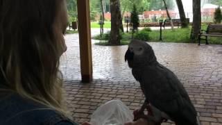 Попугай копирует Окей гугл и это жесть как похоже! parrot imitates OK Google and it's amazing
