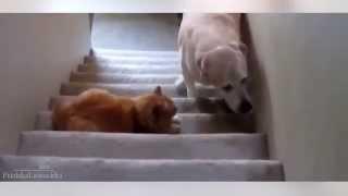 Самые смешные кошки этого лета