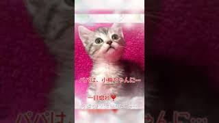 mokaままの勝手に動画(^-^; thumbnail