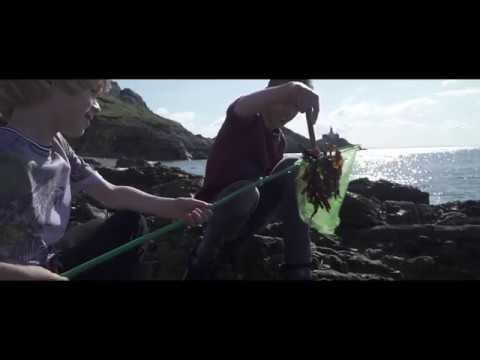 Sea Swansea Bay - Family Adventures