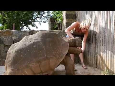 Kura-kura Terbesar di Dunia