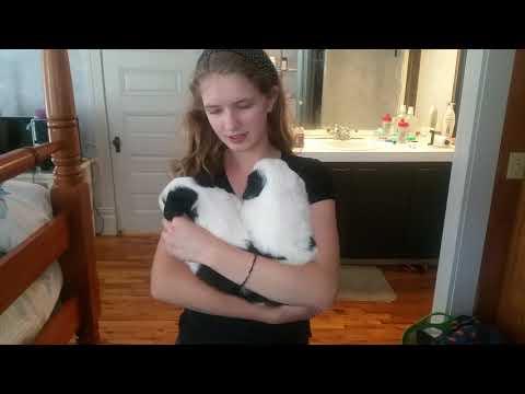PuppyFinder.com : Zuko and June