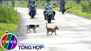 THVL | Chó thả rông - nguy cơ tiềm ẩn  tai nạn giao thông