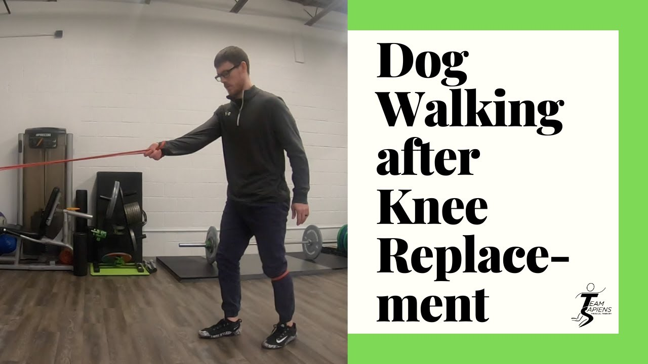 Dog walking after knee replacement