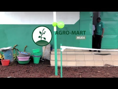 AGRO-HUB Cameroon launches AGRO-MART Muea