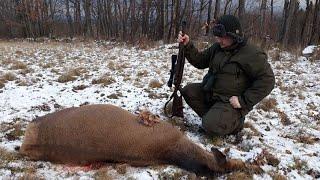 Polowanie na jelenie. Deer Hunting