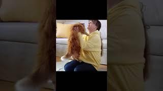Best Funny Cat Videos | Cute Cat Moments | Cat Foods | #Short