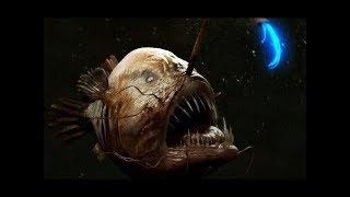 10 مخلوقات مرعبة تعيش في المحيط.. لم تراها من قبل !!