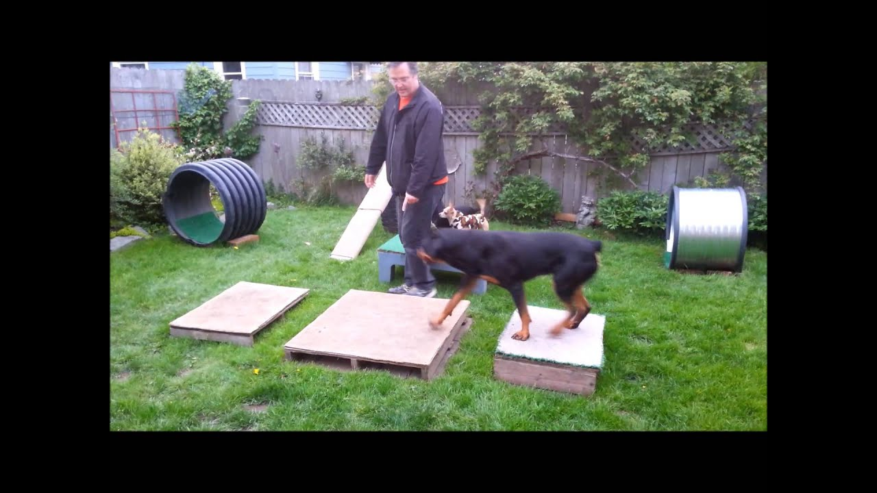 - Backyard Obstacle Course With Three Dogs - YouTube